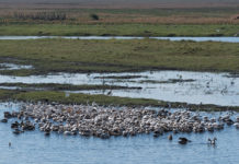 Botswana wycieczki, które mogą zachwycić